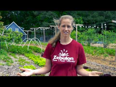 Zebulon Farm Fresh Market - Many Hands Farm