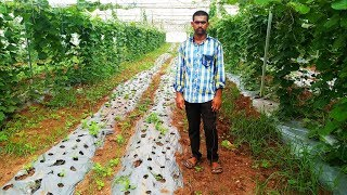 95% Subsidy | Agriculture | Shade net house farming in Telangana in Telugu