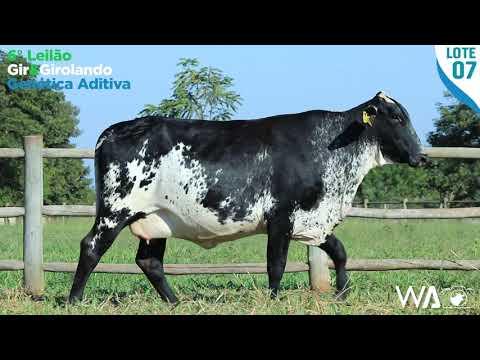 LOTE 07 - 4383 AV - 6º Leilão Gir & Girolando Genética Aditiva