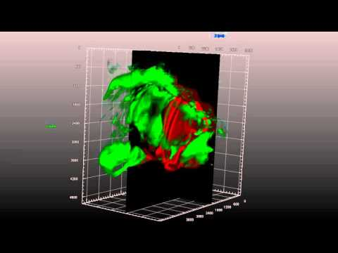 ZEISS Lightsheet Z.1: Olfactory epithelium