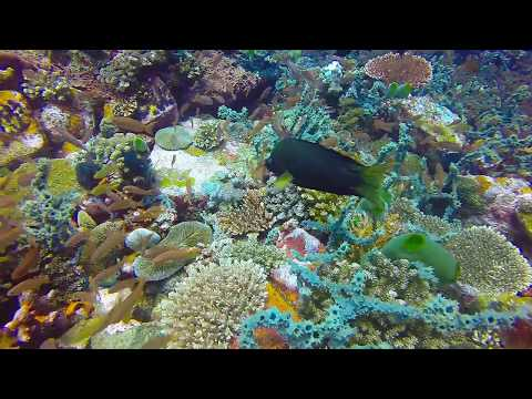 """Scuba Diving the Philippines - Verde Island, Pinnacle Dive 2 """"The Drop Off"""""""