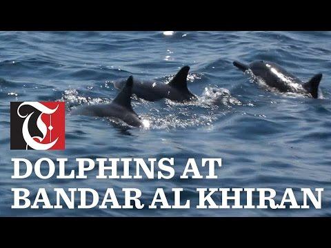 Dolphin Watching at Bandar al Khiran in Oman