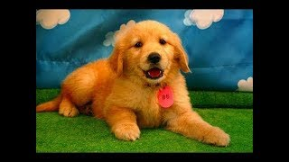 Funny Dogs Compilation 2018 - Funny Dog Videos - Funny Dogs Video