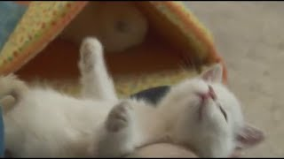 Bathing Small and Cute Kittens Funny cats