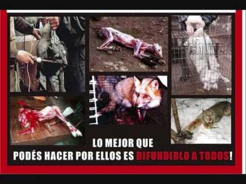 KRUELDAD ANIMAL LA PARRANDA MAGNA CON BOB RODRIGUEZ. CRUELDAD ANIMAL