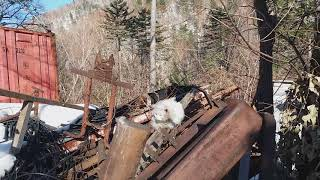 NHR ♥ Белый кот нашёлся!