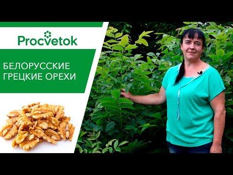 Как посадить грецкий орех в беларуси видео