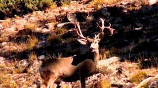 backcountry archery mule deer hunt