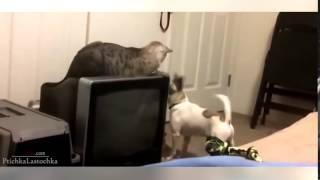 Приколы с животными  Кошки против собак  Приколы с кошками
