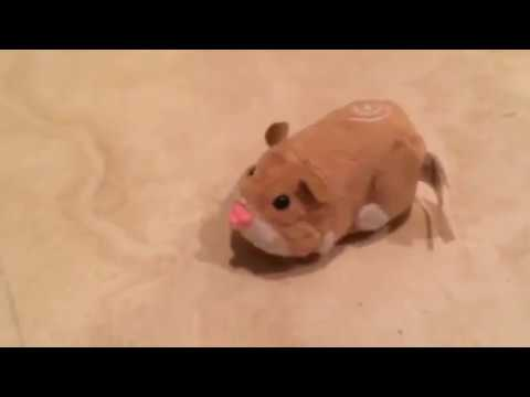 Zhu Zhu Pets - Mr. Squiggles Review