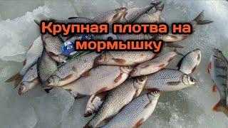Ловля весенней плотвы на мормышку на Рыбинском водохранилище Весенний жор крупной плотвы