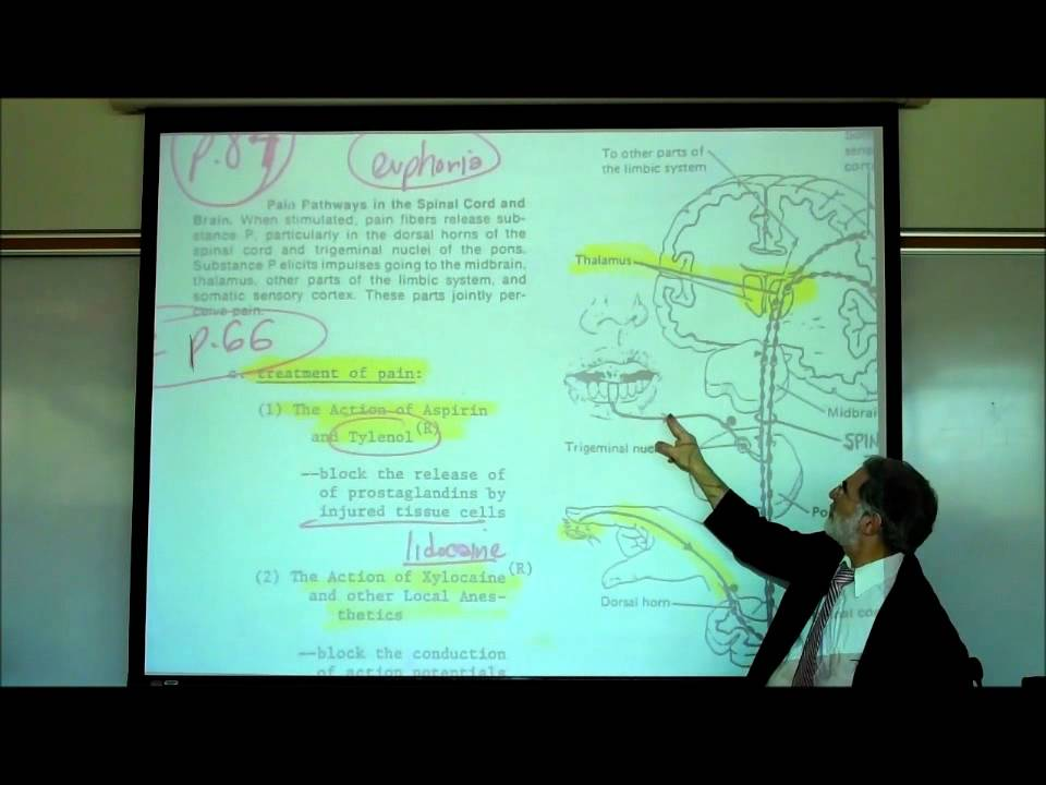 PAIN PHYSIOLOGY by Professor Fink - YouTube
