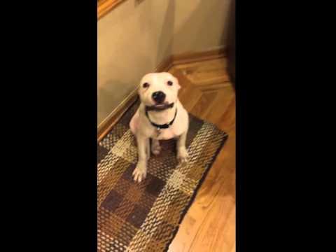 Este perro sonríe cuando posa para las fotos