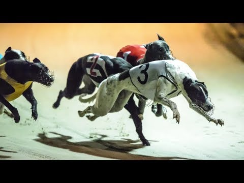 Track race –  Greyhound racing