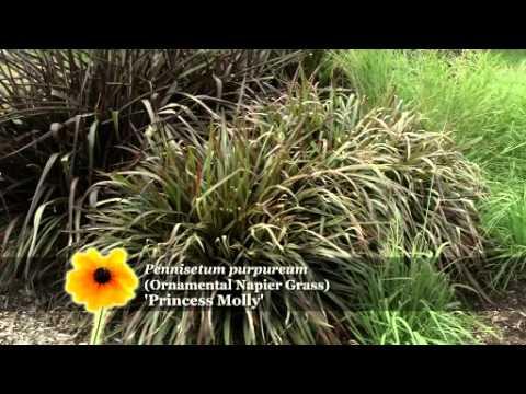Prairie Yard & Garden: Grasses for the Landscape