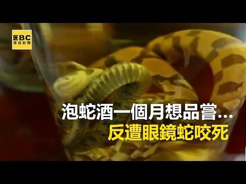 毒蛇復仇記! 泡蛇酒一個月想品嘗…反遭眼鏡蛇咬死 20170411【東森大直播】張予馨