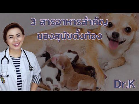 3 สารอาหารสำคัญ ของสุนัขตั้งท้อง