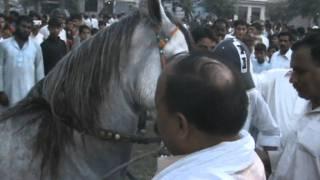 vuclip ustad damman horse dans lahore sha freed mela 2011
