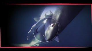 WILD FAUNA #Акула стала жертвой хищников #1-часть