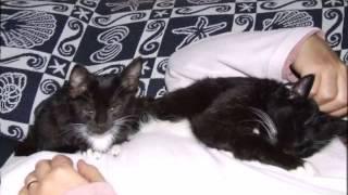 Por qué los gatos duermen encima de ti