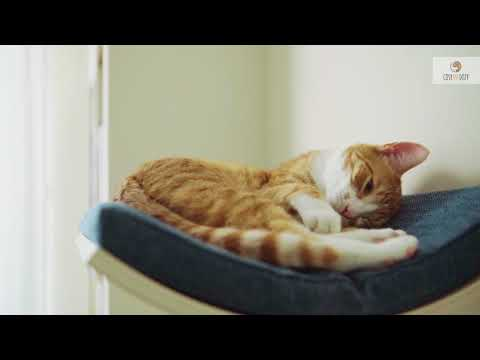 Deluxe cat furniture - CHILL cat shelf - How it's made?