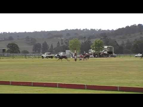 Polo Player has epic run in with goal post!