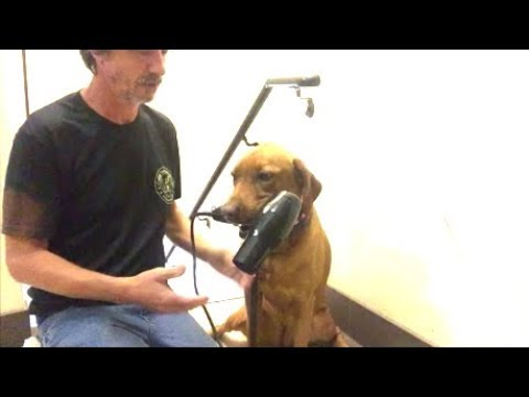 Train Dog to Conquer Fear of Hair Dryer, Vacuum, Fireworks, Gun shots, Anything