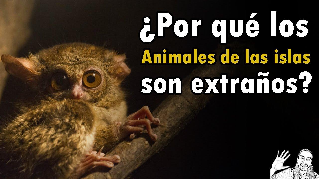 ¿Por qué son Extraños los Animales de Islas?