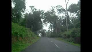 Driving through tea gardens in Wayanad