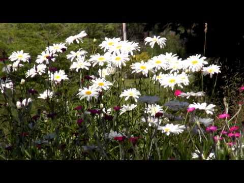 Bees, butterflies, moths, bats, and hummingbirds -  The  Pollinators  -  YouTube