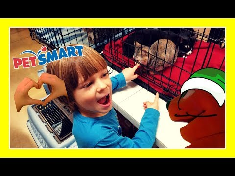 PetSmart buying a fish with Ralphie the Orange Cat TOUR [cats & dogs adoption center]