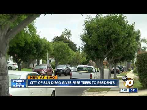 City of San Diego gives free trees to resident
