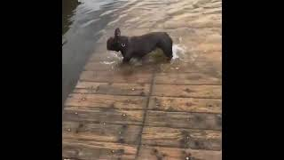 Dog Falls off Dock and Splashes Into Water - 1169145