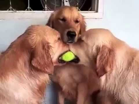 2015 Vines Three Dog Ball