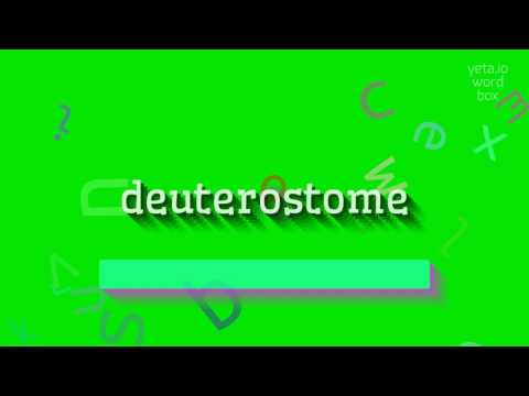 """How to say """"deuterostome""""! (High Quality Voices)"""