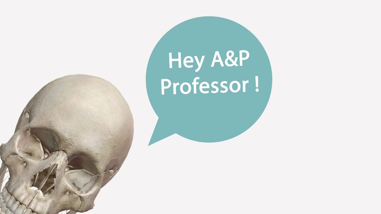 Using Visible Body Apps | Anatomy Resource for Professors - YouTube