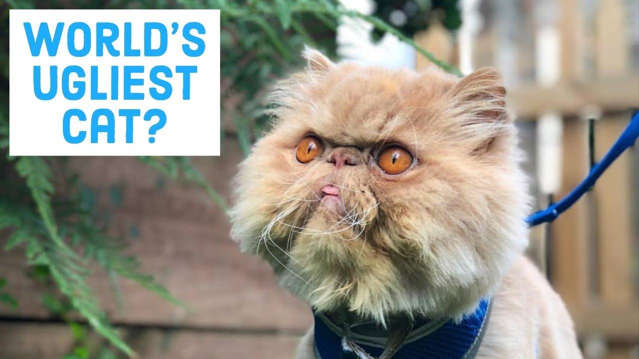 Winston Smushface Instafamous Ugly Cat Youtube