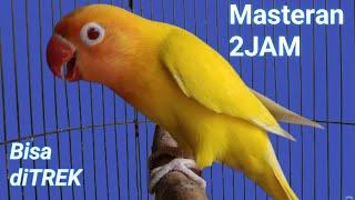 Download lagu masteran lovebird 2 JAM,,, memancing labet lawan ngekek panjang terbukti JITU