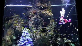 Santa Claus visits the S.E.A. Aquarium