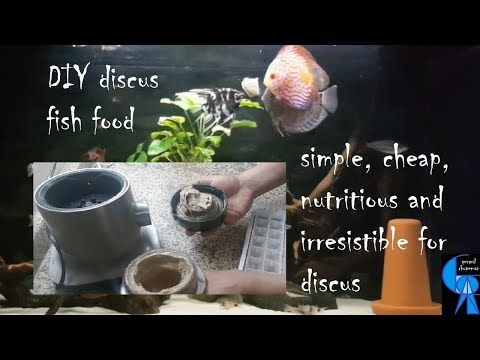 DIY Discus fish food: simple & cheap but with right nutrients