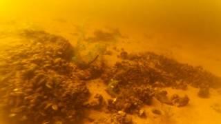 Эд под водой