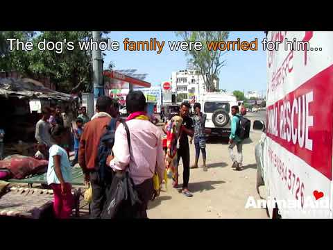 Dog's eye pops out after traumatic injury rescued