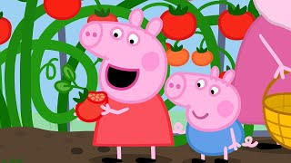 Peppa Pig Official Channel | Grandpa Pig's Greenhouse