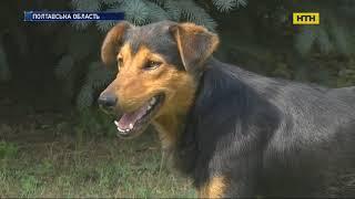 На Полтавщині зграя бездомних псів до смерті загризла чоловіка