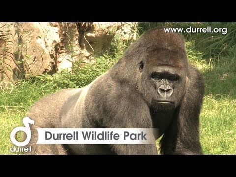Sneak peek of Durrell Wildlife Park, Jersey