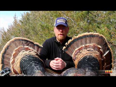 Kansas Turkey Hunting Activity Report - The Sweet Feed at Roe Hunting Resources