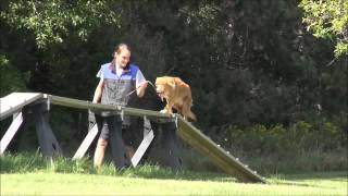 Derby (nova Scotia Duck Tolling Retriever) Boot Camp Dog Training Video