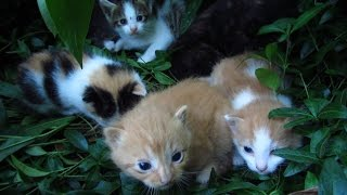 Kittens live again under the bushes