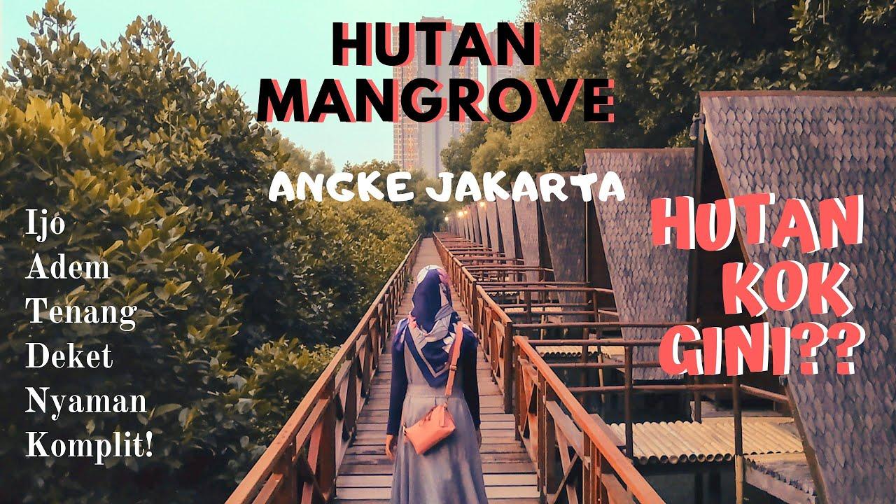 Wisata Alam Hutan Mangrove Kapuk Angke Jakarta | Wisata Alamnya Jakarta! | Hutan Kok Gini! - YouTube