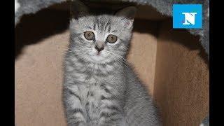 💖 СМЕШНЫЕ ЖИВОТНЫЕ 🍼 🎀 🐈 наш новый забавный веселый котенок  МАЯ приколы с кошками